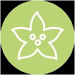10 dagen bloeigarantie